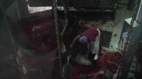 EoA Turkish slaughterhouse Dec 13