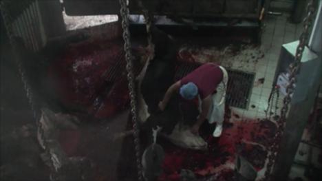EoA Turkish slaughterhouse Dec 13