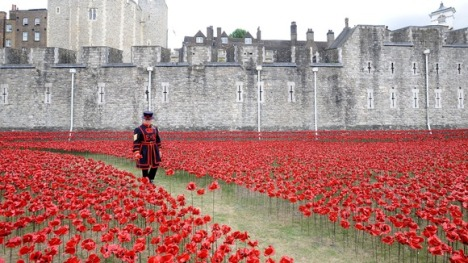 tower of london poppies 1