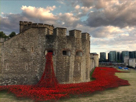 tower of london poppies 2