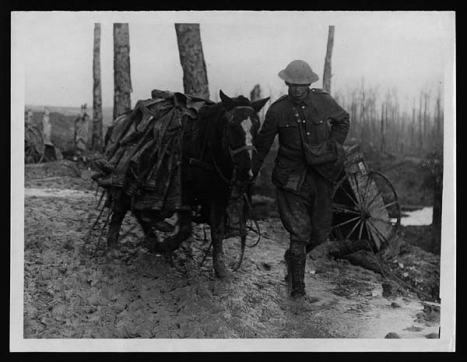 war horse 2
