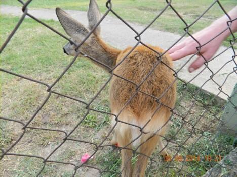 deer 2 8 sept