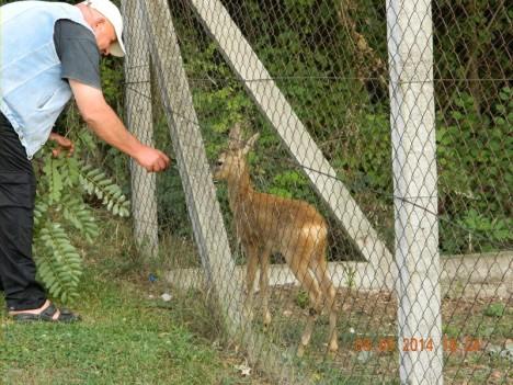 deer 3 8 sept