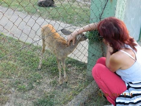 deer 5 10 sept