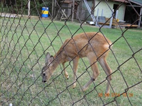 deer 6 8 sept