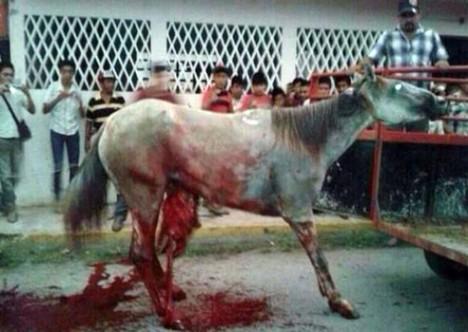 horse mexico 2