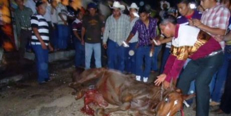 horse mexico petition