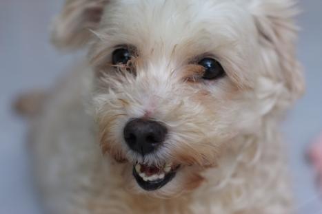 punish cruel pet owners