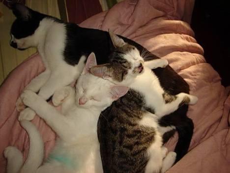 Felix kittens