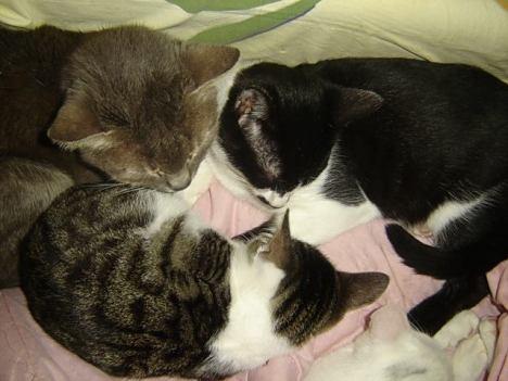 felix kitties 20 Nov
