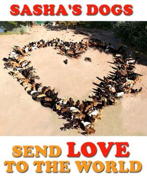dogs send love