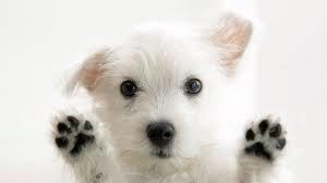 freedog1