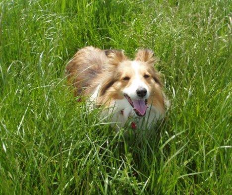 Grasshound