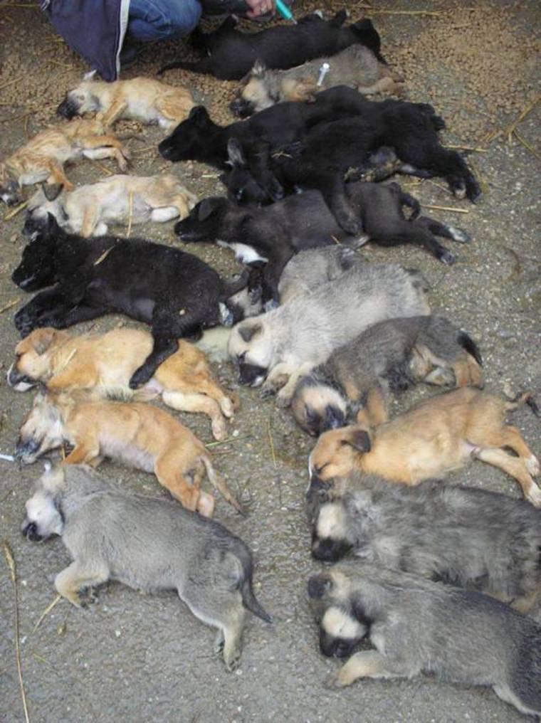 Romanian Dog Rescue Facebook