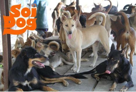 soi dogs 4
