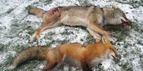 stop predator hunts