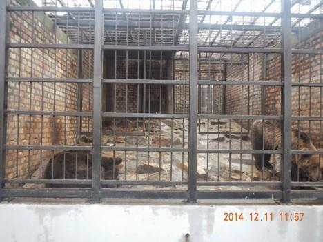 bear zoo