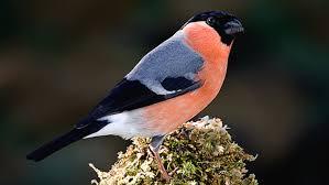 garden bird 1
