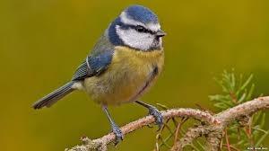 garden bird 2