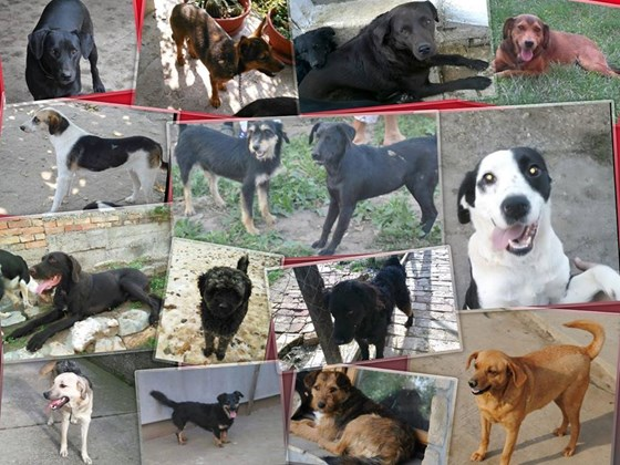 animals need a voice Humane society tv spot, 'rescue animals now' featuring wendie malick voice over actors: provide a link to your professional website containing your reel submit once per commercial, and allow 48 to 72 hours for your request to be processed.