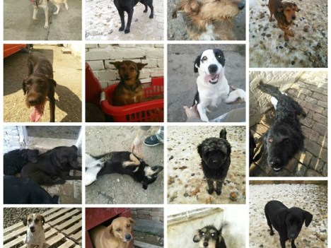 16 shelter dogs