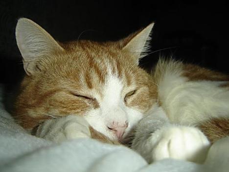 4 feb freddie sleeps