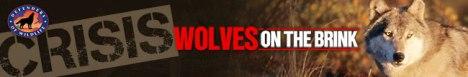 DOW Woolves on brink