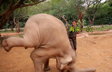 China tv show cruelty