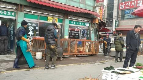 Korean dog market
