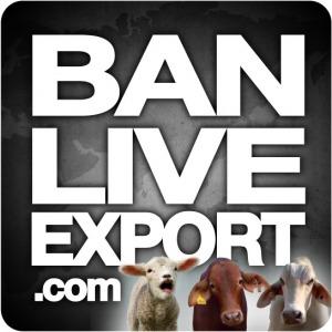 live export
