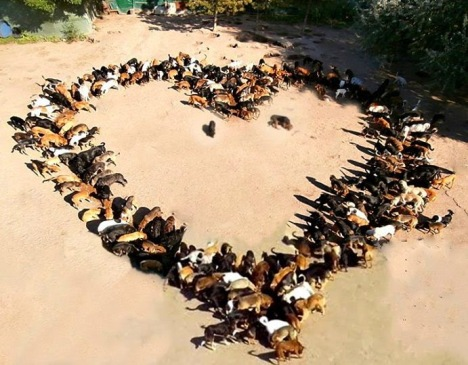 sasha dogs love heart