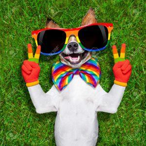 victory dog