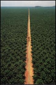 palm oil 4