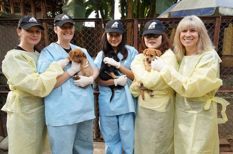 animals asia pups buried alive 1