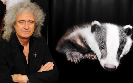 Brian May Badgers