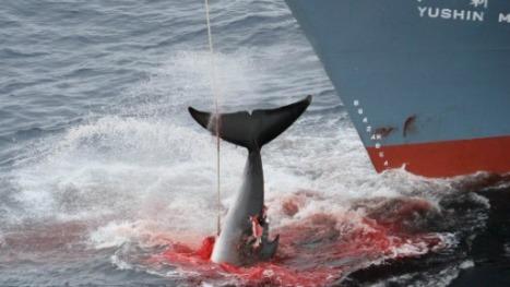 whale+-tail-EN