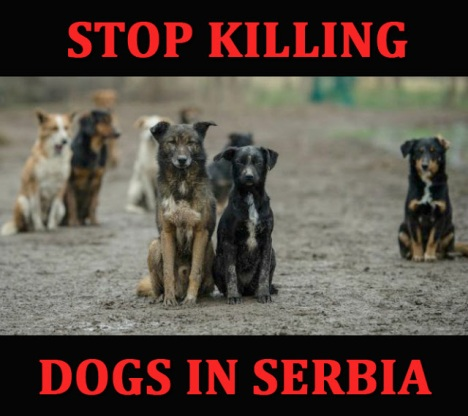 stop killing dogs in serbia