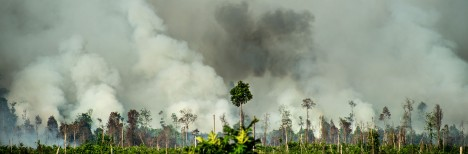 palm oil fire