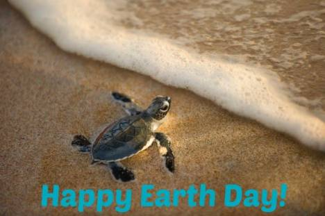 turtle earth day