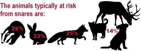 animals at risk