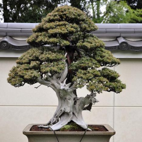 bonsai post