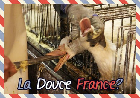 ciwf foie gras