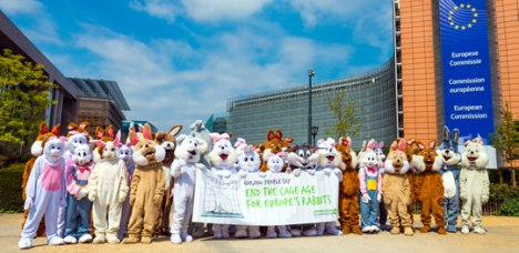 ciwf rabbit petition