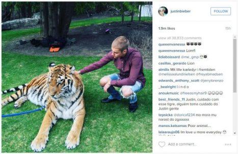 jb tiger