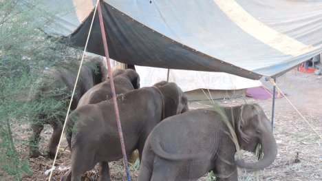 elephants back to circus