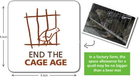 end the cage quail