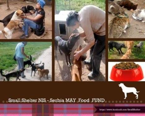 shelter nis1