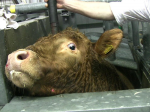 Slaughterhouse petition