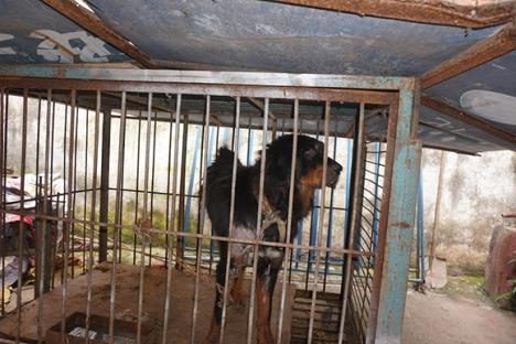 Chinese-Circus-Dog