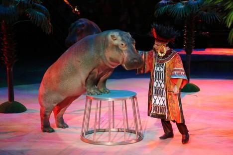 circus hippo 2